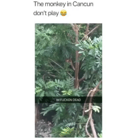 The monkey just wanted some cheeks 😂 • Follow @savagememesss for more posts daily: The monkey in Cancun  don't play  IM FUCKEN DEAD The monkey just wanted some cheeks 😂 • Follow @savagememesss for more posts daily
