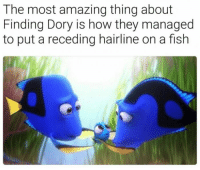 The most amazing thing about  Finding Dory is how they managed  to put a receding hairline on a fish