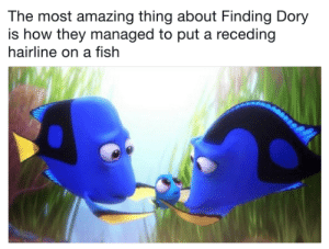 Hairline, Finding Dory, and Fish: The most amazing thing about Finding Dory  is how they managed to put a receding  hairline on a fish