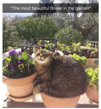 """Beautiful, Flower, and  Most Beautiful: """"'The most beautiful flower in the garden'  13"""