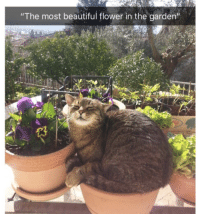 "Beautiful, Memes, and Flower: ""The most beautiful flower in the garden""  13 Magnificent."