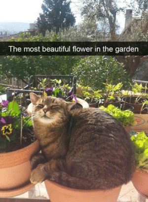 Beautiful, Memes, and Flower: The most beautiful flower in the garden