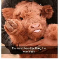 What a beautiful animal (@hilarious.ted): The most beautiful thing I've  ever seen What a beautiful animal (@hilarious.ted)