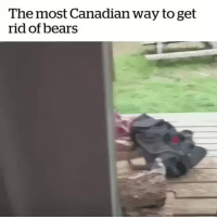 Lmao, Shit, and Tumblr: The most Canadian way to get  rid of bears mitski-miyawakis:  ask-finny:   official-sachsen-anhalt:  trapperweasel:   ethanredotter:  trapperweasel: I asked my boyfriend in Canada once, how he deals with polar bears because I was curious about what to do and he was like, just be calm, let them know you're there, and give them space and they'll usually just go away.  In Finland on the other hand. https://www.youtube.com/watch?v=z7_pVrIshxA  Lmao Finland Man ain't taking shit from bears.   PERRrrRrrRrKELE  ((Two kinds of people))   finnish man: PERRRRKELE! finnish bear: what the actual fuck- i'm out!