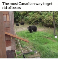 Memes, Bears, and Canada: The most Canadian way to get  rid of bears Moving to Canada 🇨🇦