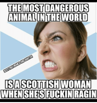 True story...: THE MOST DANGEROUS  ANIMAL IN THE WORLD  ISASCOTTISHWOMAN True story...