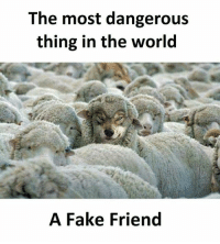 Fake, Memes, and World: The most dangerous  thing in the world  A Fake Friend Follow our new page - @sadcasm.co