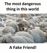 Fake, World, and Friend: The most dangerous  thing in this world  A Fake Friend!