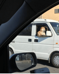 9gag, Doge, and Memes: The most handsome delivery driver in Japan. Follow @9gag @9gagmobile 9gag shibainu (credit: TW - pianOton) doge cute