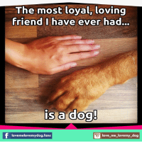 Memes, 🤖, and Loyal: The most loyal, loving  friend I have ever had...  is a dog!  S love-me-lovemy dog  lovemelovemydog.fans