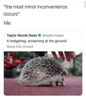 taylor: *the most minor inconvenience  occurs*  Me:  Taylor Nicole Dean O @taylorndean  A hedgehog, screaming at the ground:  Show this thread