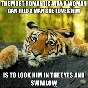 22 Romantic Memes For Your Beloved   SayingImages.com: THE MOST ROMANTIC WAYA  WOMAN  CAN TELLA MAN SHE LOVES HIM  IS TO LOOK HIM IN THE EYES AND  SWALLOW  unnyBei 22 Romantic Memes For Your Beloved   SayingImages.com