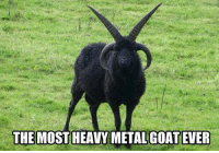 Metal: THE MOSTHEAVY METAL GOAT EVER