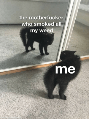 at least once a week: the motherfucker  who smoked all  my weed  me  made with mematic at least once a week