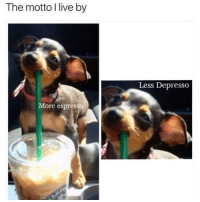 Life, Memes, and Coffee: The motto I live by  Less Depresso  More espresso Coffee=life 💁🏽‍♀️💁🏽‍♀️