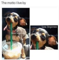 Memes, Girl, and Live: The motto I live by  Less Depresso  More espresso Yasss girl! 🥤 Follow @thepettybitch @thepettybitch @thepettybitch @thepettybitch
