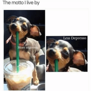 Animals, Memes, and Animal: The motto l live by  Less Depresso  More espresso Animal Memes Of The Day 32 Pics – Ep48 #animalmemes #dogmemes #catmemes - Lovely Animals World