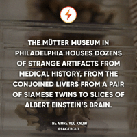 Follow the world with @intravelist ✈️🌏: THE MUTTER MUSEUM IN  PHILADELPHIA HOUSES DOZENS  OF STRANGE ARTIFACTS FROM  MEDICAL HISTORY FROM THE  CONJOINED LIVERS FROM A PAIR  OF SIAMESE TWINS TO SLICES OF  ALBERT EINSTEIN'S BRAIN.  THE MORE YOU KNOW  @FACT BOLT Follow the world with @intravelist ✈️🌏