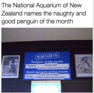 Aquarium, Fish, and Good: The National Aquarium of New  Zealand names the naughty and  good penguin of the month  NAUGH'ilY  Penguin of the month  Timmy  Stole fish  Pushed another penguin over  Good penquin of the month  Timmy  Good swimmer  Betty  Waited patiently for fish Timmy is just misunderstood