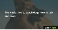 They didn't succeed...: The Nazis tried to teach dogs how to talk  and read.  uber  facts They didn't succeed...