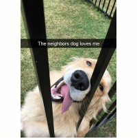 Funny, Ted, and Good: The neighbors dog loves me He is a good boy (@hilarious.ted)