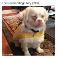 Funny, My House, and House: The Neverending Story (1984)  @tank.sinatra  MADE WITH MOMUS It was either this or Princess Bride in my house