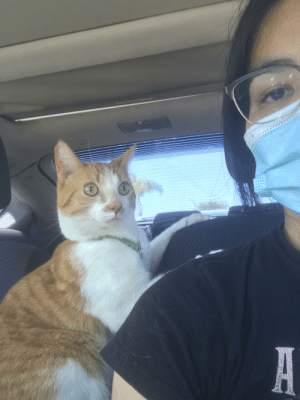 The new norms: 1) face mask 2) cats on a leash: The new norms: 1) face mask 2) cats on a leash