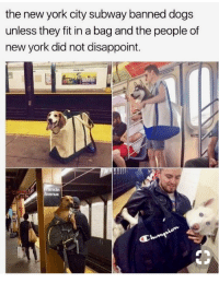 Dogs, Memes, and New York: the new york city subway banned dogs  unless they fit in a bag and the people of  new york did not disappoint.  anklin  Avenue Memes