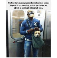 Lean, Memes, and Subway: The New York subway system banned canines unless  they can fit in a small bag, so this guy trained his  pit bull to calmly sit in his small bag...  Do not lean ondoor