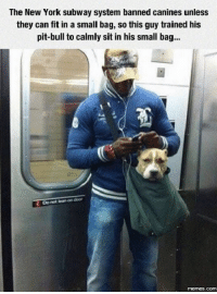 Dank, 🤖, and Pit Bull: The New York subway system banned canines unless  they can fit in a small bag, so this guy trained his  pit-bull to calmly sit in his small bag...  Do not lean on door  memes.com