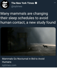New York, New York Times, and Nytimes: The New York Times  @nytimes  Many mammals are changing  their sleep schedules to avoid  human contact, a new study found  Mammals Go Nocturnal in Bid to Avoid  Humans  nytimes.com