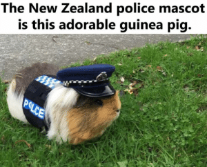 mascot: The New Zealand police mascot  is this adorable guinea pig.  POLICE