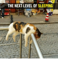 Perhaps it is Caturday?  https://9gag.com/gag/aDz6wRB/sc/funny?ref=fbsc: THE NEXT LEVEL OF SLEEPING Perhaps it is Caturday?  https://9gag.com/gag/aDz6wRB/sc/funny?ref=fbsc