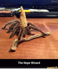 (y) Fantasy and Sci-Fi Rock My World: The Nope Wizard  SHAR  ifunny.CO (y) Fantasy and Sci-Fi Rock My World