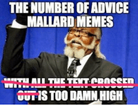 AdviceAnimals You had to have had seen this coming...: THE NUMBER OF ADVICE  MALLARD MEMES  OUTISTOO DAMN,HIGH AdviceAnimals You had to have had seen this coming...