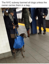 Dogs, Lmao, and Memes: The NYC subway banned all dogs unless the  owner carries them in a bag... Lmao