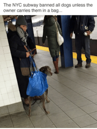 Dogs, Reddit, and Subway: The NYC subway banned all dogs unless the  owner carries them in a bag... tastefullyoffensive:  (via emilNYC)