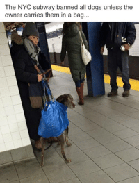 Dank, Subway, and 🤖: The NYC subway banned all dogs unless the  owner carries them in a bag