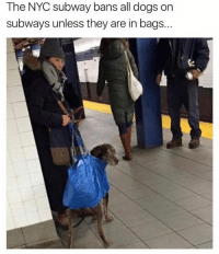 Dank, Subway, and 🤖: The NYC subway bans all dogs on  subways unless they are in bags... Problem solved.