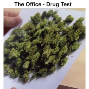 Memes, The Office, and Office: The Office - Drug Test hush hush