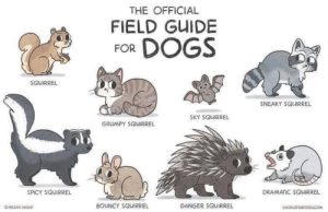 Phone purge 2: back to the purging: THE OFFICIAL  FIELD GUIDE  FOR DOGS  SOUIRREL  SNEAKY SQUIRREL  SKY SQUIRREL  GRUMPY SQUIRREL  DRAMATIC SQUIRREL  SPICY SQUIRREL  BOUNCY SQUIRREL  DANGER SQUIRREL  OMEGAN MOKAT  DOOPLEFORFOODCOM Phone purge 2: back to the purging