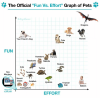"""radicalreptiles:  Fixed the graph. : The Official """"Fun Vs. Effort"""" Graph of Pets '  Dragons  Dogs  Your Friend's Dog  Horses  Cats  FUN  Hamsters  Ferrets  Parakeets  Rabbits  Snakes  Ants  Turtles  Sea  Monkeys  Tarantulas  Hermit  Crabs  Goldfish  lguanas  Tropical  Fish  Babies  Tamagotchi  Magnified  3,000,000x  EFFORT radicalreptiles:  Fixed the graph."""