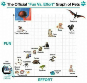 "Cats, Friends, and Goldfish: The Official ""Fun Vs. Effort"" Graph of Pets  pet rocks  Dragons  Horses  Your Friend's Dog  Cats  FUN  Hamsters  Ferrets  Parakeets  Rabbits  Snakes  Ants  Turtes  Sea  Monkeys  Hermit  Crabs Goldfish  guanas  Tropical  Fish  Tamagotch  003,000  EFFORT Graph of Pets"