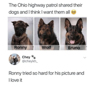 Melted my heart a little bit: The Ohio highway patrol shared their  dogs and I think I want them all  TYO  TODAY  Wolf  Ronny  Bruno  Chey  @cheykh_  Ronny tried so hard for his picture and  I love it Melted my heart a little bit