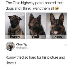 https://t.co/YZ0vtlyWhn: The Ohio highway patrol shared their  dogs and I think I want them all  TYO  CTODAY  Wolf  Ronny  Bruno  Chey  @cheykh  Ronny tried so hard for his picture and  I love it https://t.co/YZ0vtlyWhn
