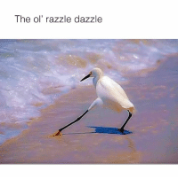 It's Friday, it's just after 5 Time to give it the....: The ol' razzle dazzle It's Friday, it's just after 5 Time to give it the....