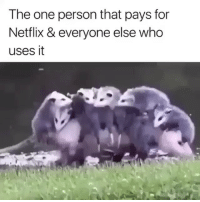 Funny, Netflix, and Who: The one person that pays for  Netflix & everyone else who  uses it 😂😂😩