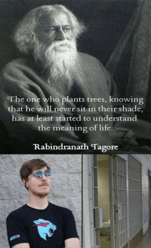 Butthurt, Dank, and Life: The one who plants trees, knowing  that he will never sit in their shade,  has at least started to understand  the meaning of life  Rabindranath Tagore Mrbeast by butthurt_cream MORE MEMES