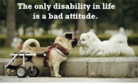 Bad Attitude: The only disability in life  is a bad attitude.