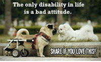 Bad Attitude: The only disability in life  is a bad attitude.  SHARE IF YOU LOVE THIS!